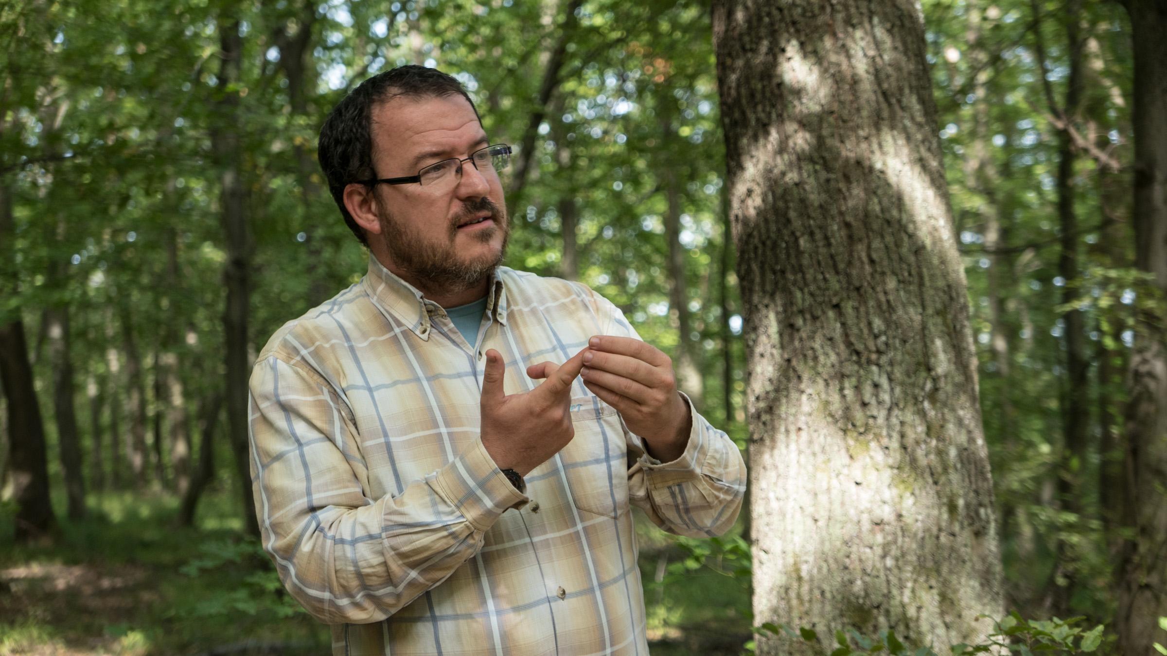 Érdemes vadabbnak hagyni az erdőinket