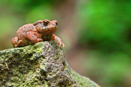 Why is it surprising that toads prefer milder winters?