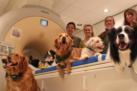 Dogs' brains process both what we say and how we say it