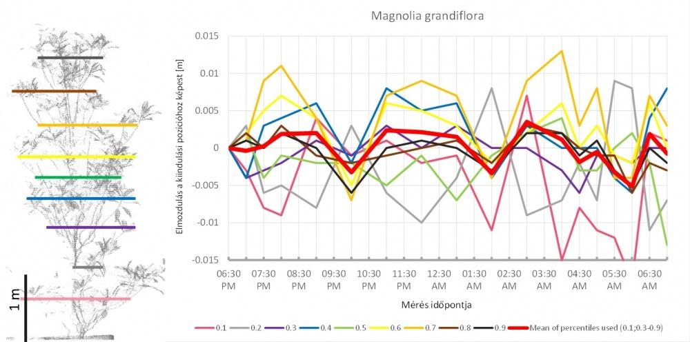 Az ábra bal oldalán a magnólia háromdimenziós modelljének oldalnézete látható. A színes vonalak jelölik azokat a magassági határokat, amelyek a pontok egytizedét tartalmazó tartományokat elválasztják. Ahogy a fa alakja az éjszaka folyamán megváltozott, ez