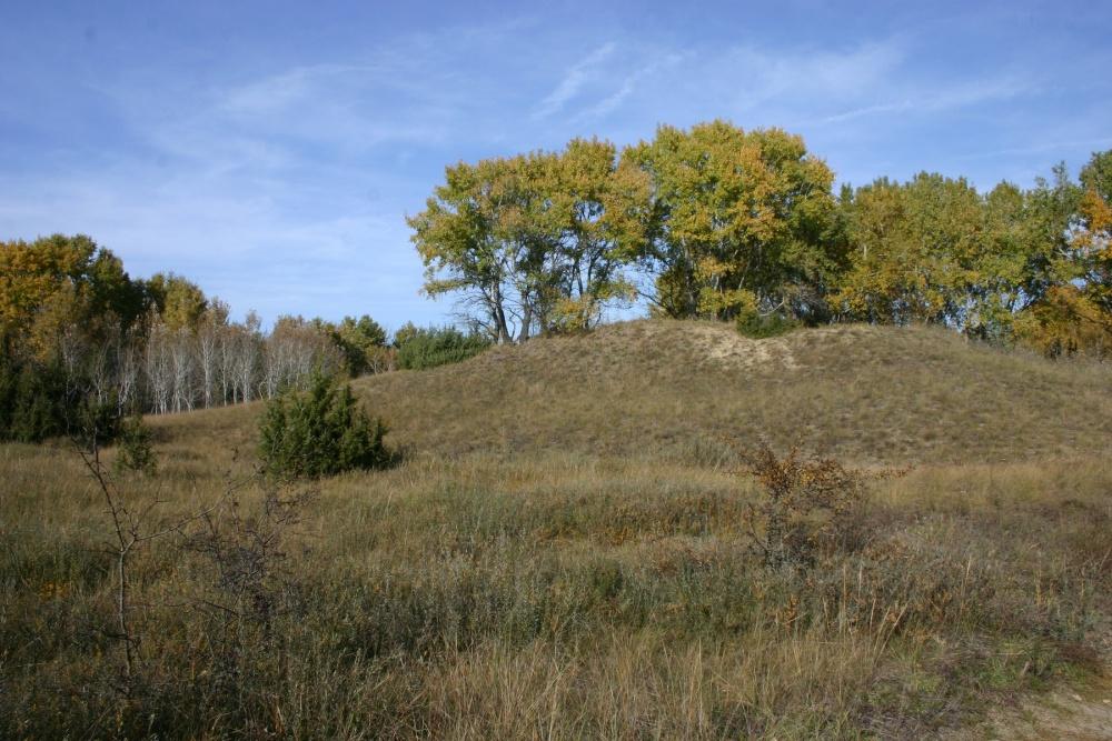 Erdőssztyepp a Kiskunsági Nemzeti Park homokbuckáin