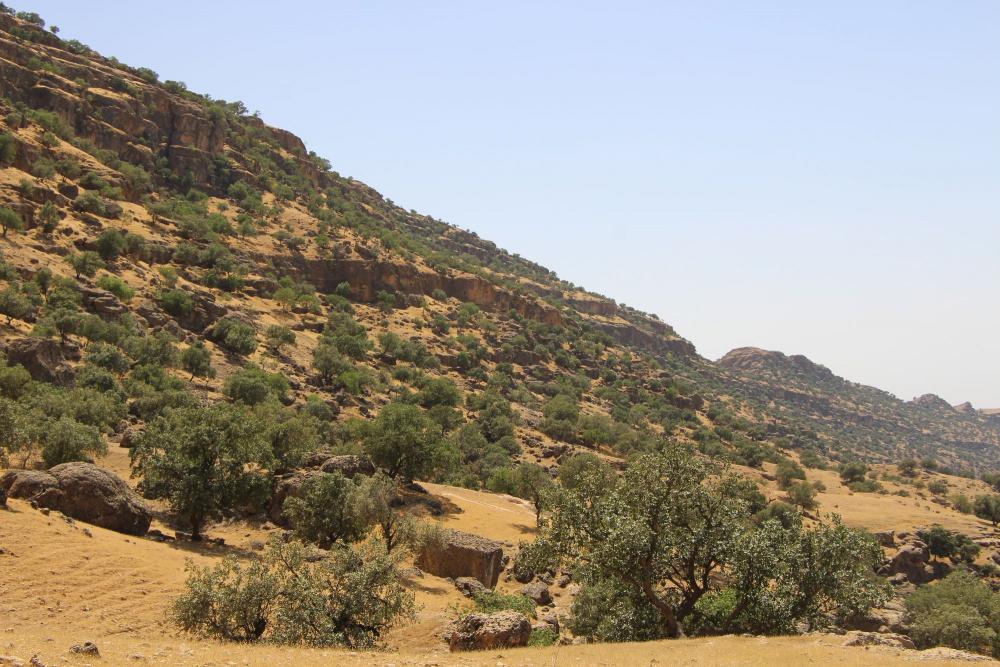Tölgyfák és száraz gyepnövényzet alkotta erdőssztyepp Iránban