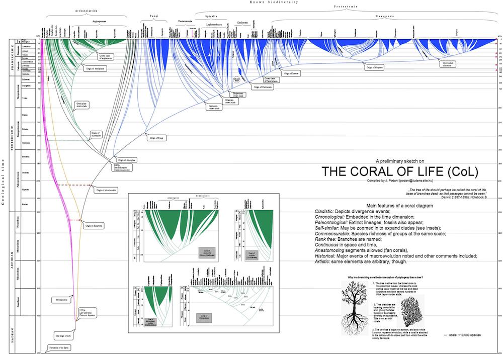 Az élet korallja prototípusa. Az ábra Microsoft Powerpoint felhasználásával készült egy kézzel rajzolt változat nyomán. Az ábra nagyobb felbontásban elérhető az Evolutionary Biology oldalán