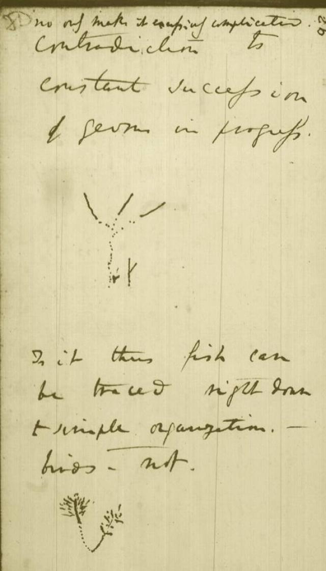 Charles Darwin ábravázlata az élet koralljáról (B jegyzetfüzet, 1837–1838