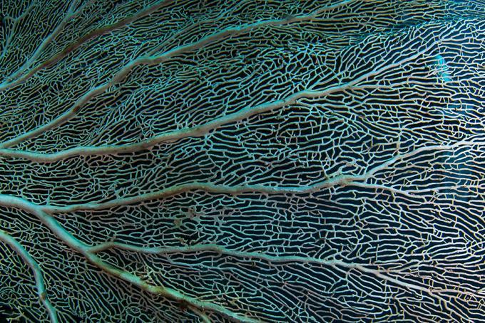 Van jobb megoldás az evolúció ábrázolására: ez az élet korallja