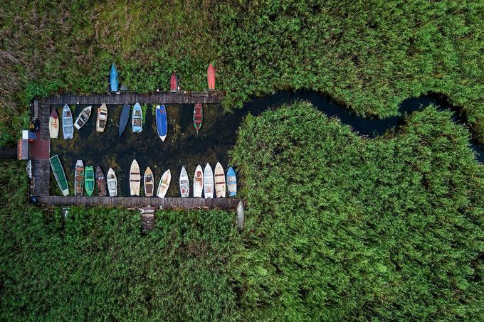 Az Ökológiai Kutatóközpont Balatoni Limnológiai Intézet közleménye a balatoni nádasok irtásáról