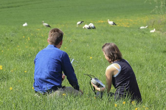 A termikelő madarak taníthatják a jövő vitorlázó drónjait